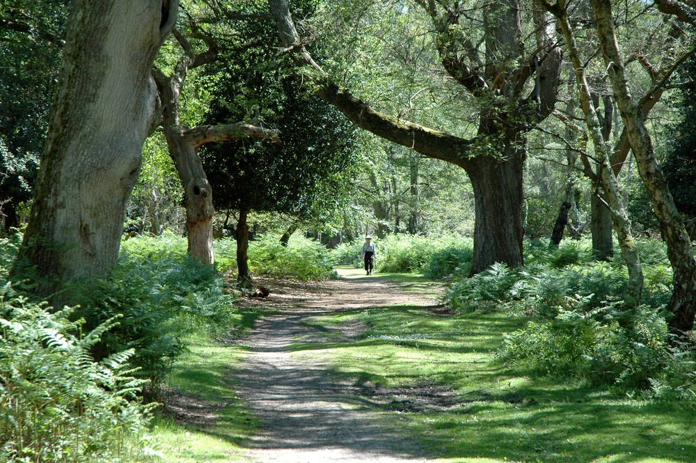 The 1000-year-old New Forest